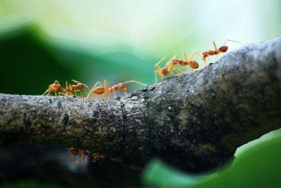 Cara Mengusir Semut dari Rumah yang Terbukti Ampuh - Tips dan Cara