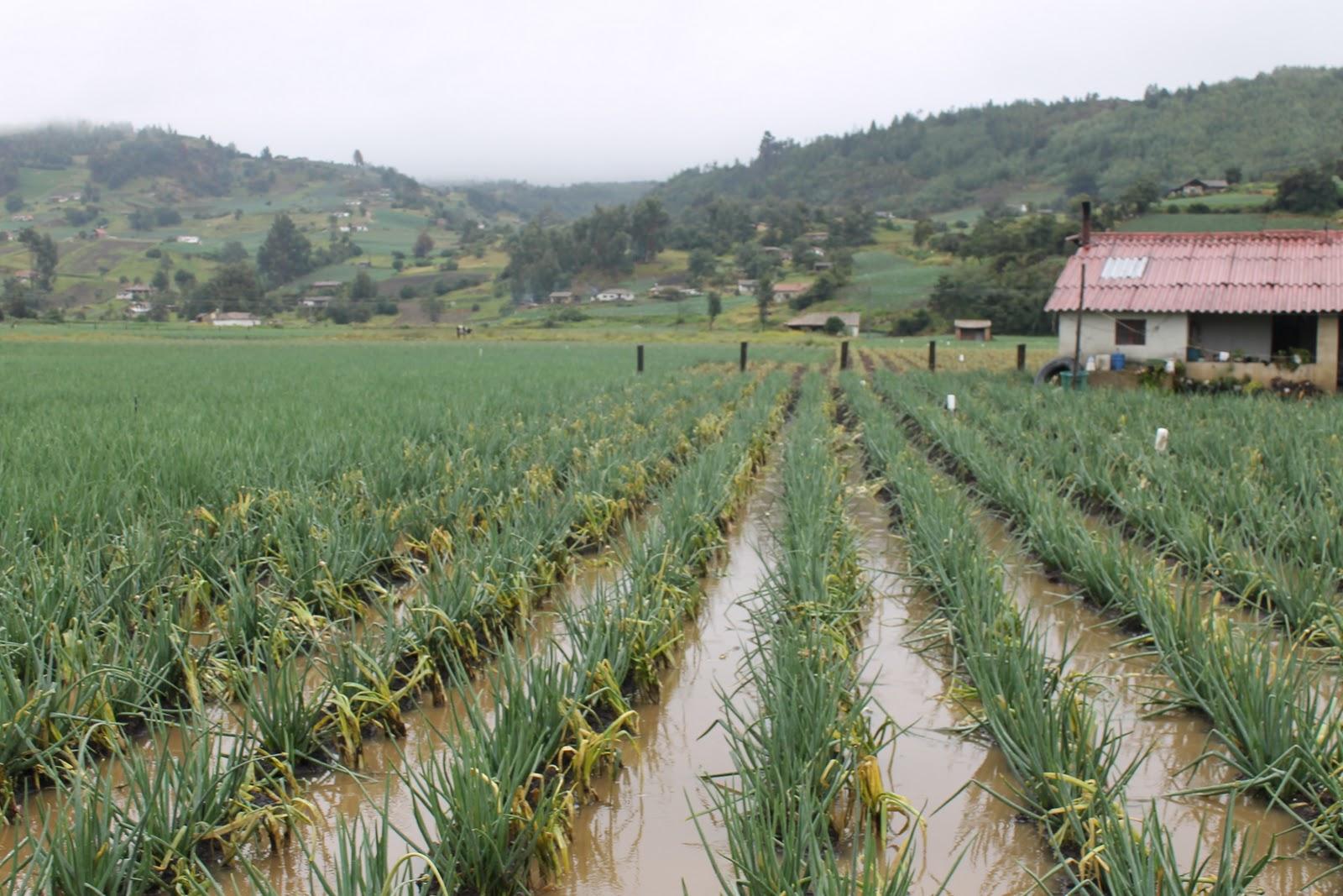 Octubre 2011: CORPOBOYACÁ: Octubre 2011