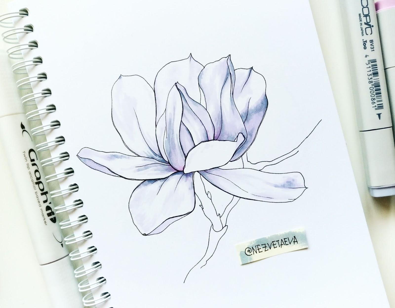 Sketchbook tour. My first flowers, Sonia Nezvetaeva, artist diary