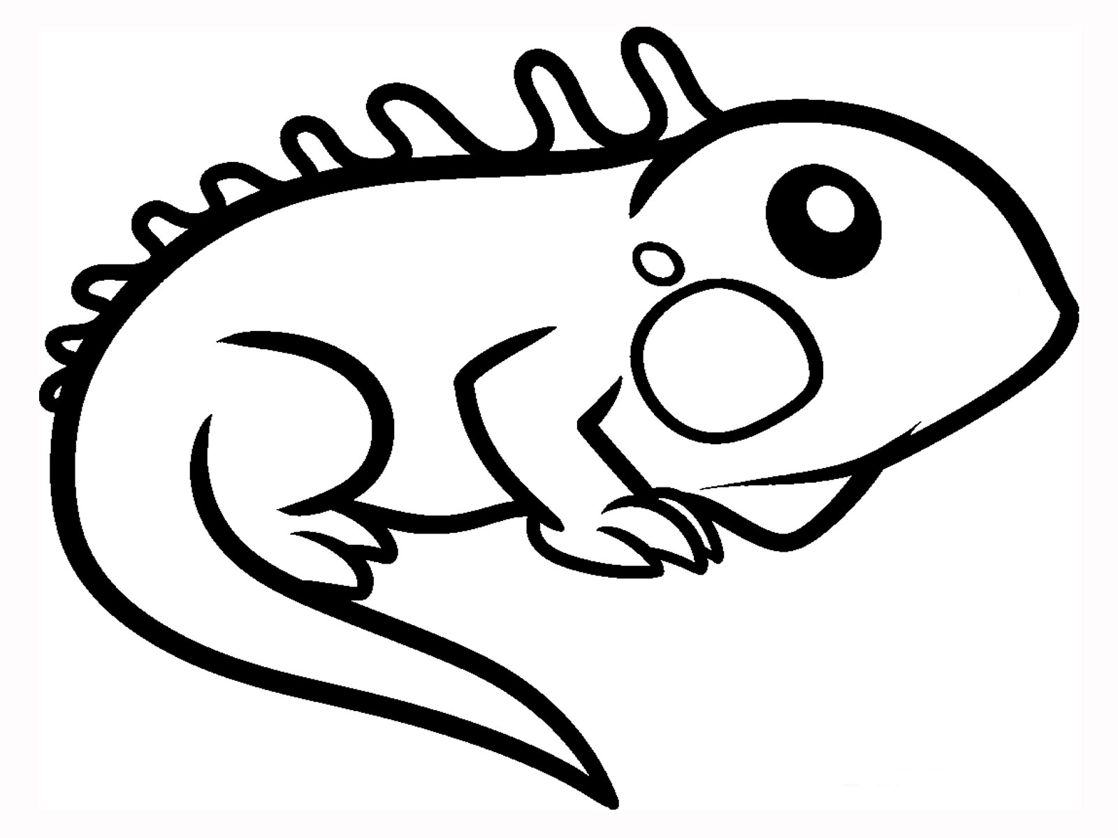 iguana coloring pages iguana facts and truth