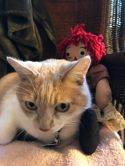 Real Cat Webster with Raggedy Ann
