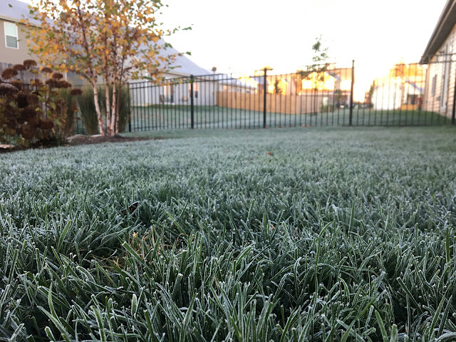 frost on grass in backyard