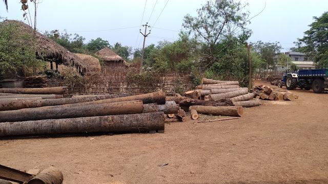 timber depot