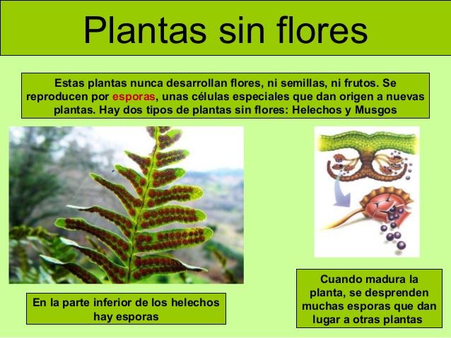 Blog del europa para 5 y 6 las plantas for Como se llaman las plantas ornamentales