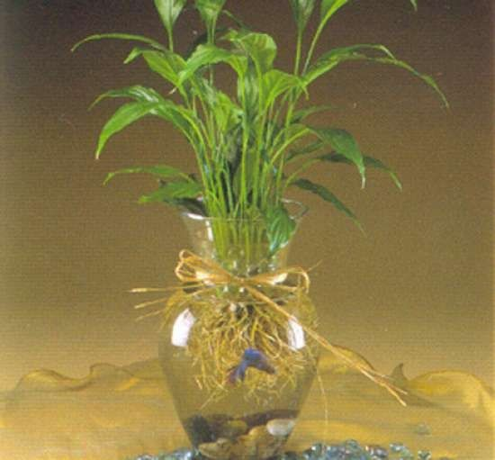 Can a Betta Fish Live in a Vase with a Plant Image