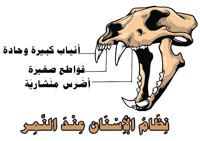 الأسنان عند الحيوان