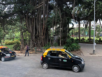 Conjecture: For every banyan tree in Mumbai, there are at least 2 taxis? (Source: Palmia Observatory)