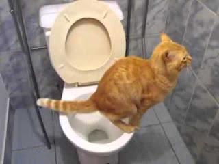 Broma pesada en baño público con inodoro y Nutella gatito