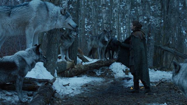 arya with nymeria her direwolf