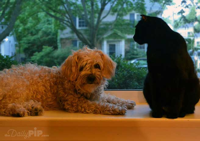 What your pets are really doing in the early morning hours