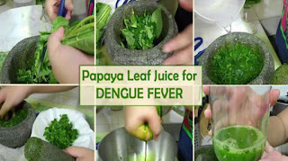 ramuan daun pepaya untuk demam berdarah