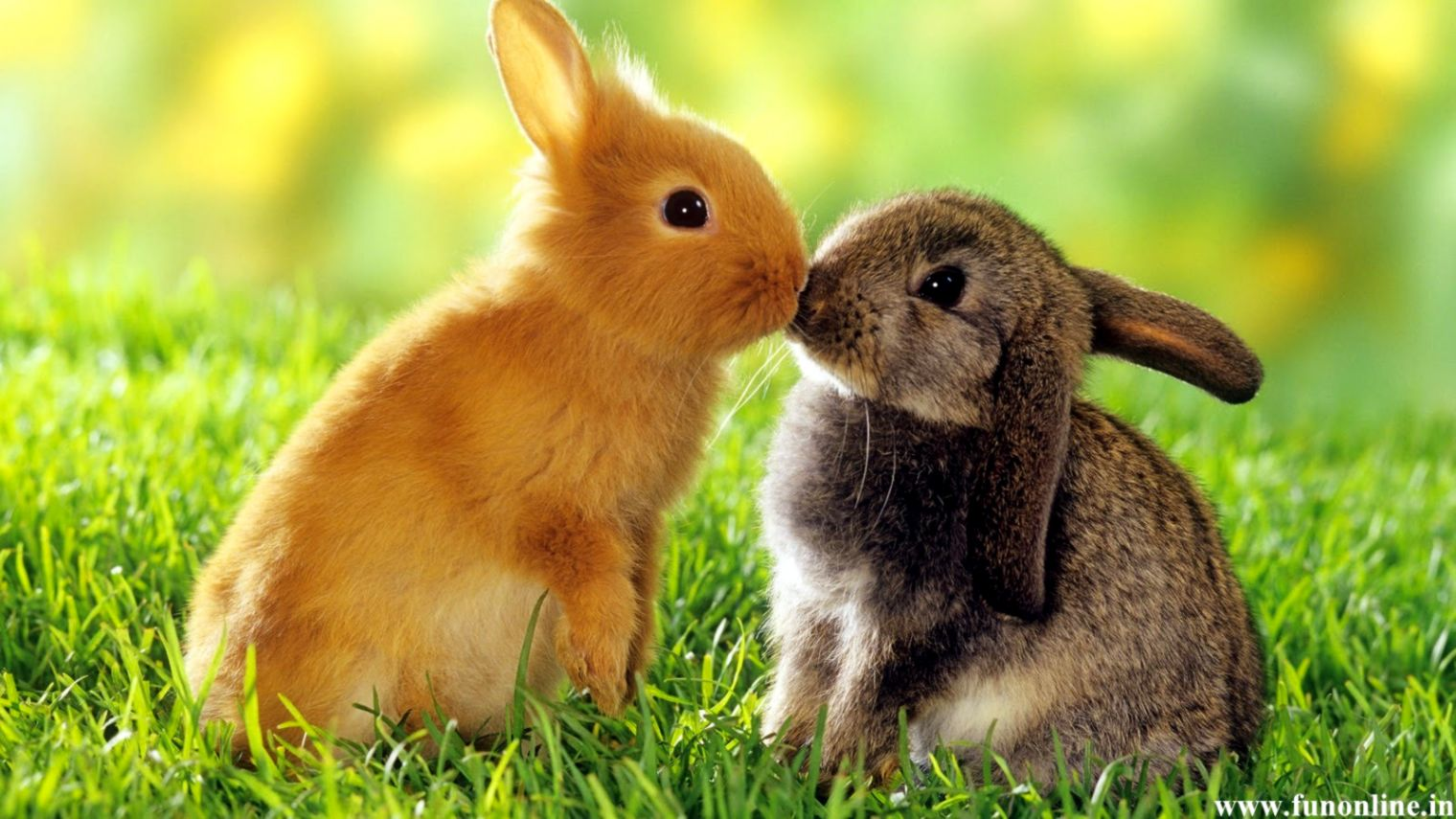 Cute Rabbit Wallpaper Free Download Wallpapers Library
