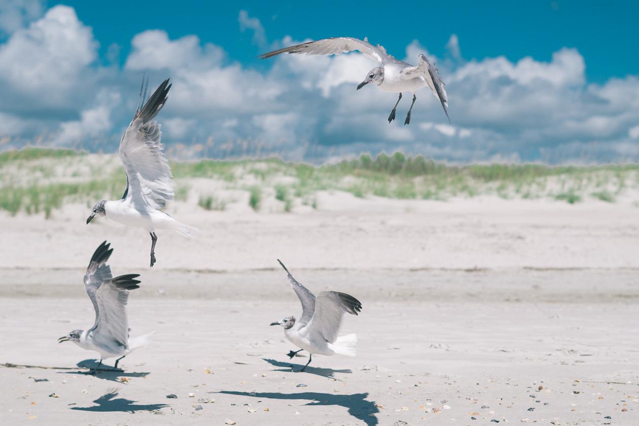 holden beach, nc, beach pictures, beach photography