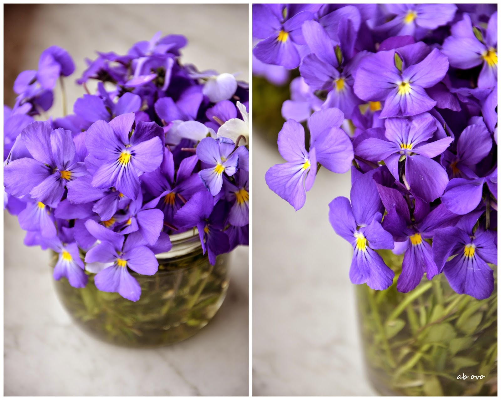 violette-cristallizzate