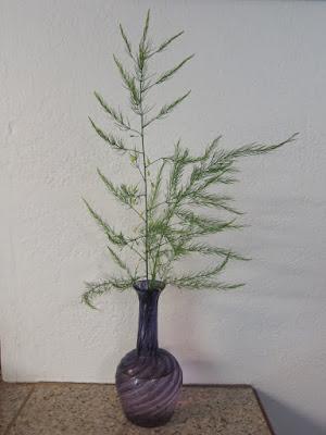 asparagus in a vase