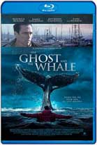 The Ghost and The Whale (2016) HD 720p Subtitulada