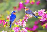 İlkbahar Mevsimi İçin 3 Kıtalık Şiir