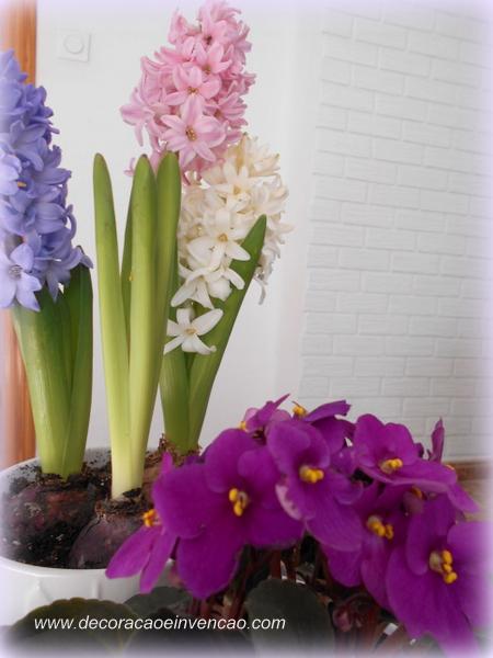 Primavera dentro de casa