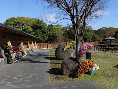 【大阪府枚方市】山田池公園・古典菊展