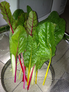 fresh picked swiss chard from the garden