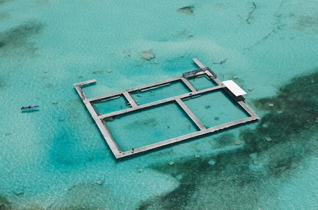 Informações sobre o Dolphin Island Park em Punta Cana