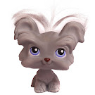 Littlest Pet Shop 3-pack Scenery Shi Tzu (#227) Pet