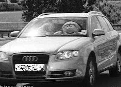 Witziges Blitzer Bild mit Stofftier am Auto Steuer