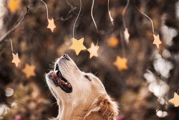 Bonito perro
