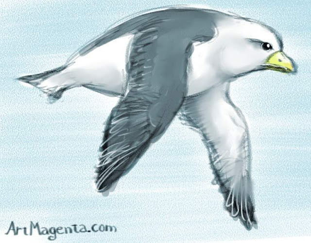 Fulmar, a bird drawing by Artmagenta
