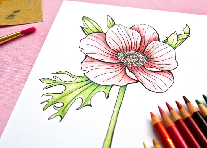 coloring an anemone flower image with a video by Kim Dellow