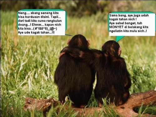 Foto Monyet Pacaran Ketawa Lucu