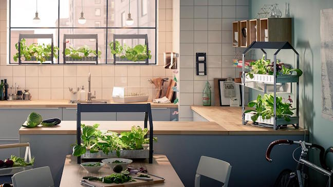sunday morning cultiver ses salades avec ikea. Black Bedroom Furniture Sets. Home Design Ideas