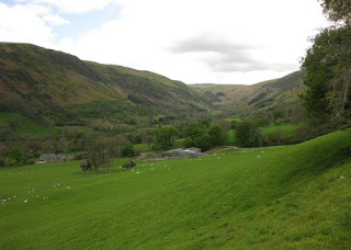 Sheep in a valley outside Llangynog, Wales