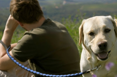 Labrador Retriever dog and owner on a bushwalk