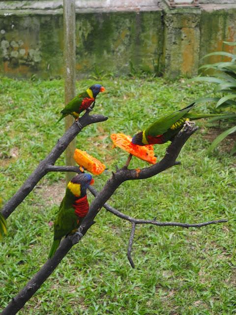 Bird Park, Kuala Lumpur, Malaysia
