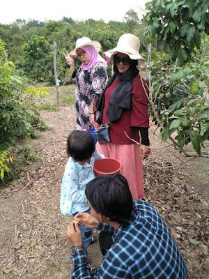 Kebun Lengkeng/kelengkeng Desa Penghujan Bintan