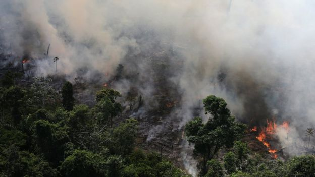 Leonardo DiCaprio Pledges $5 Million To Save Amazon Rainforest