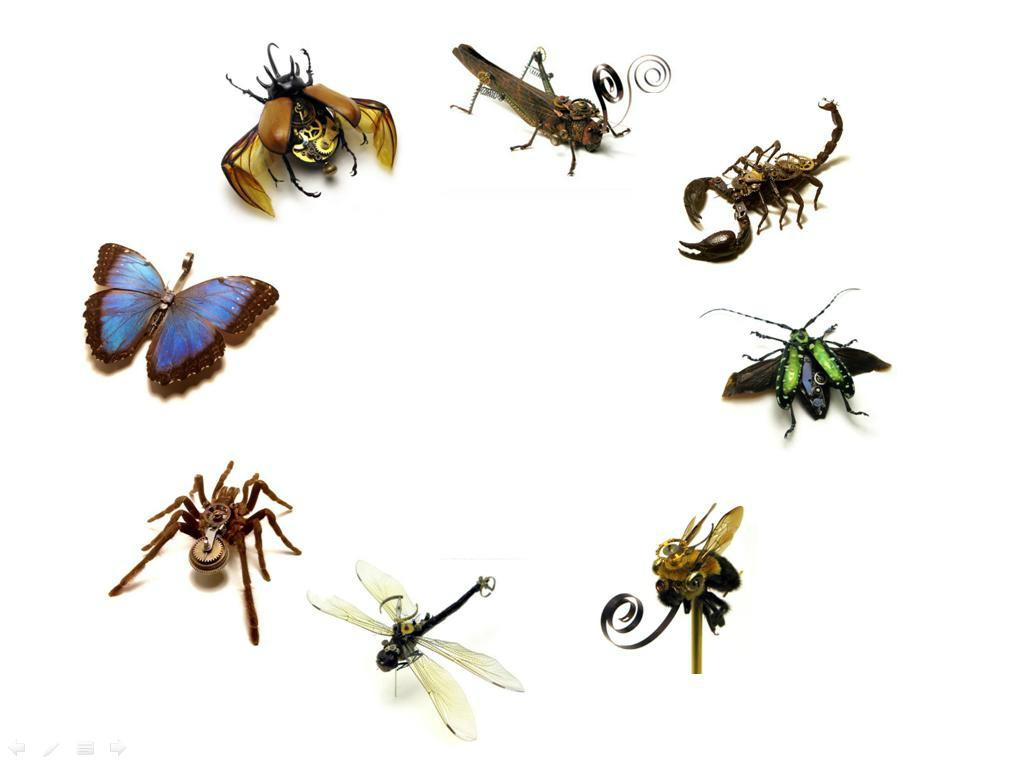 Importancia de los insectos en la agricultura - Insectos en casa fotos ...