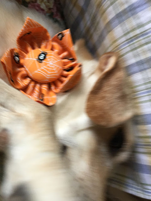 Blurred close-up of Layla wearing her Halloween flower