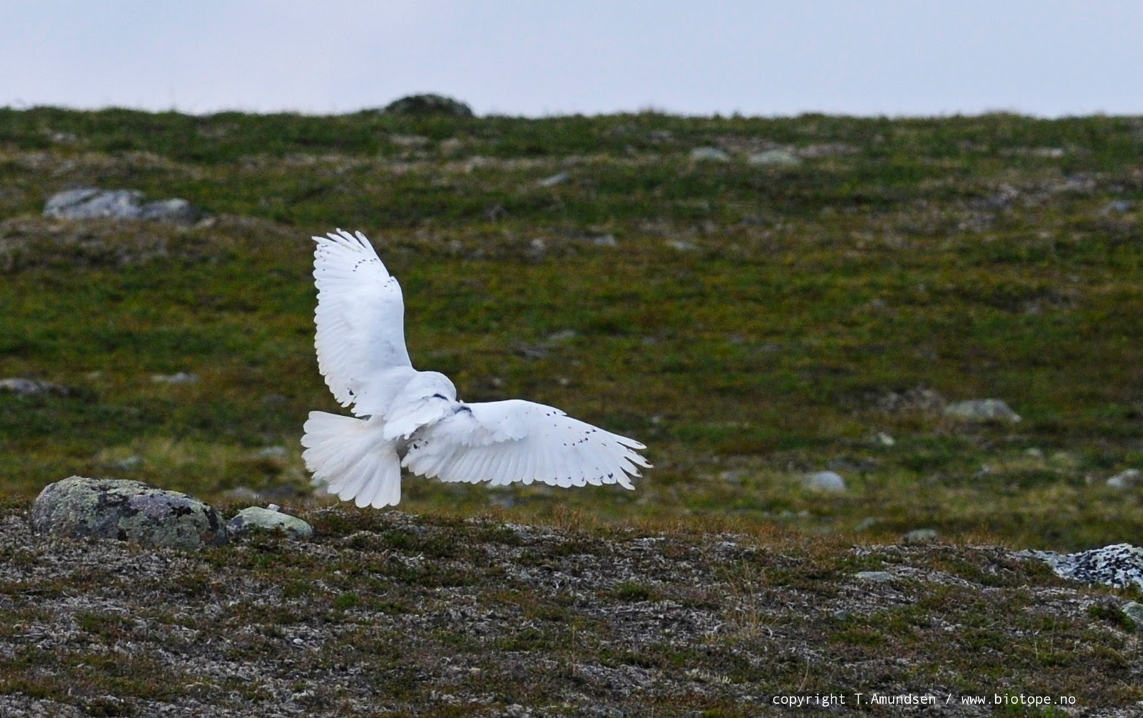 biotope mapping arctic norway birds and sites in eastern finnmark