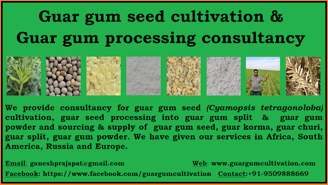 Guar Seed Farming / Agriculture Consultancy