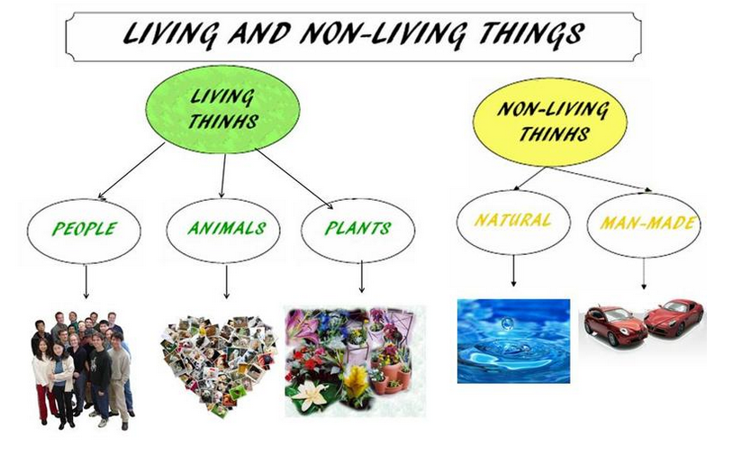 Difference between Living and Non-Living Things
