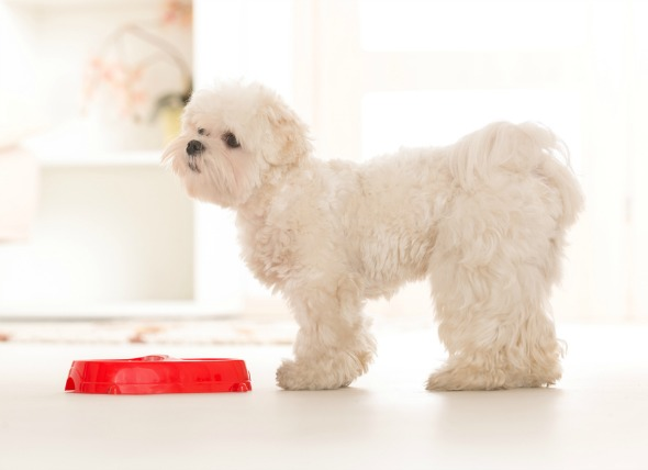 Why is Lamb Dog Food Good for Your Pet