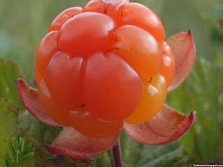 Cloudberry fruit images wallpaper