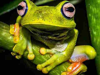 dream meaning of frogs