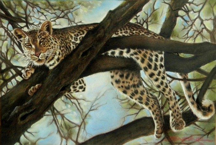 Красота Южной Африки. Sabine Barber 2
