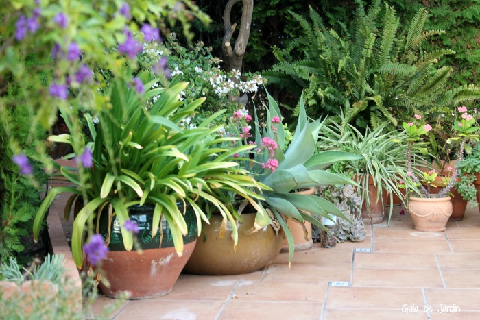 Macetas de la terraza