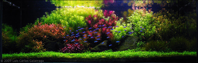 Aquascape - Seni Berkebun Di Dalam Air
