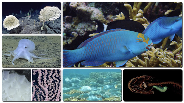 creatures of the deep - click to enlarge