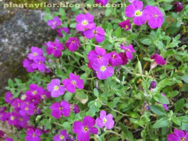 Arbustos De Jardin Con Flores Good Arbustos De Jardin Con Flores